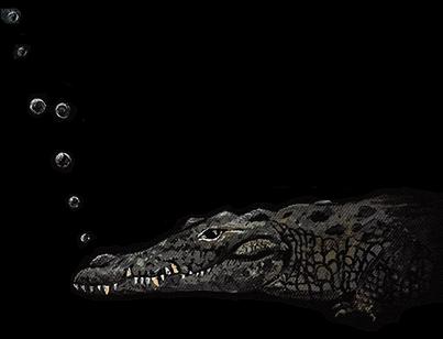 Peter Pan, Croc